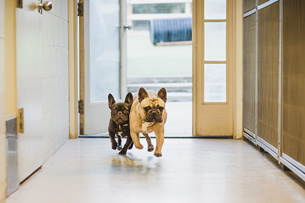 dogs in lobby