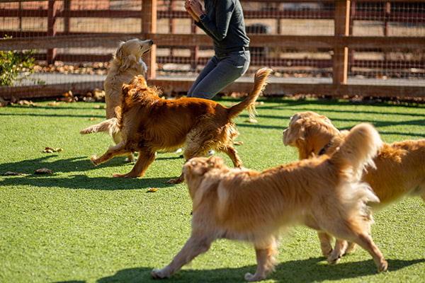 dog daycare