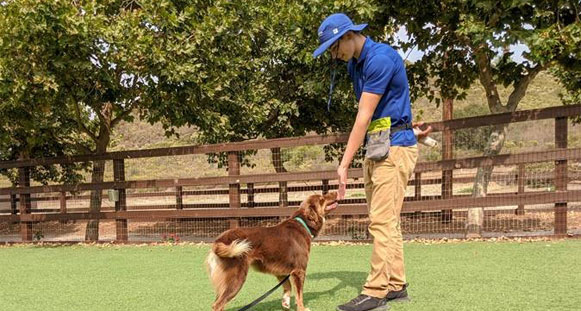 Dog trainer giving a dog a treat