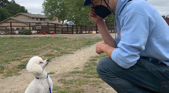 Training a dog to sit and stay